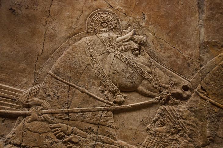 chariot-horse-british-museum-161