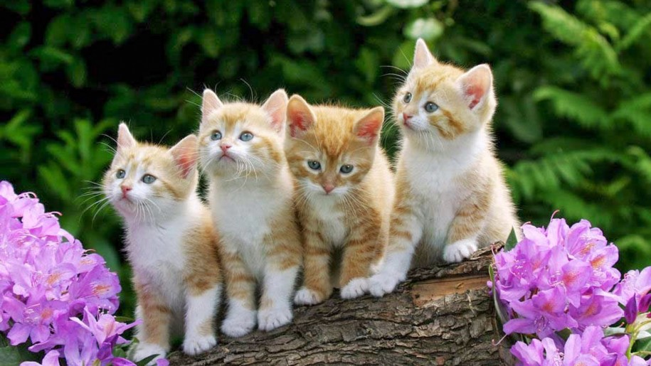 kittens-yellow-wood-violet-flowers