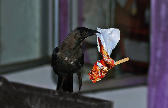 crow with a paper