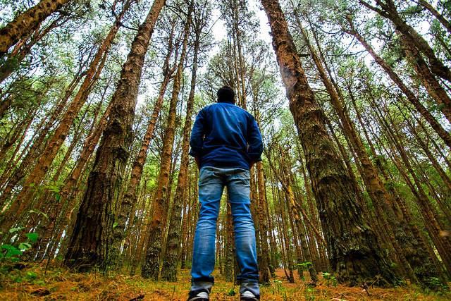 manintheforest
