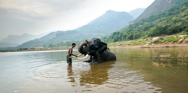 elephant with guide